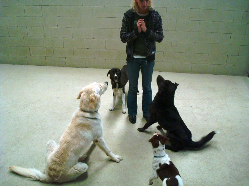 Rescue dogs learning to sit in group
